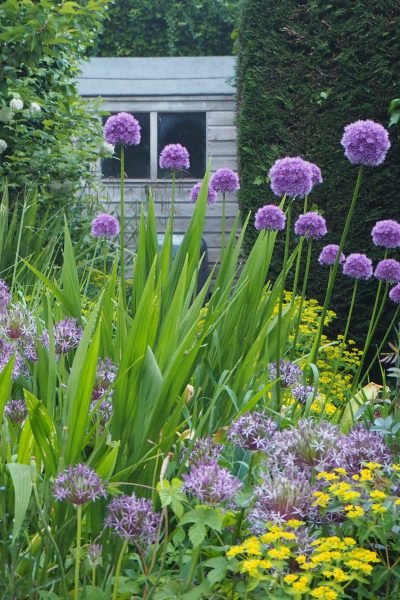 Save time and money with plants that grow themselves. 25 gorgeous self-seeding plants. #gardening