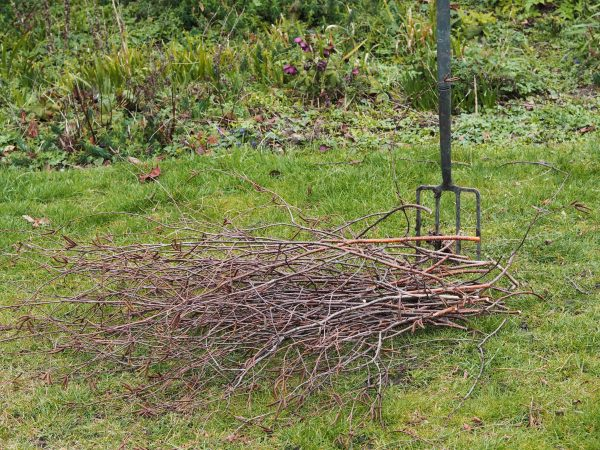Silver birch twigs for natural plant supports
