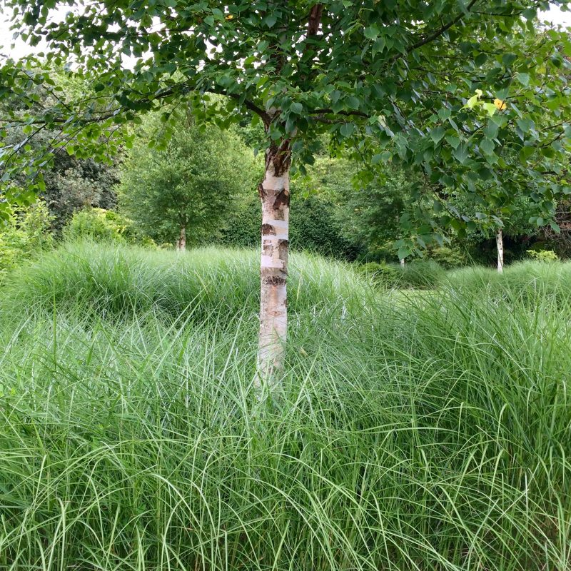 Inspiring ideas for using grasses in your garden