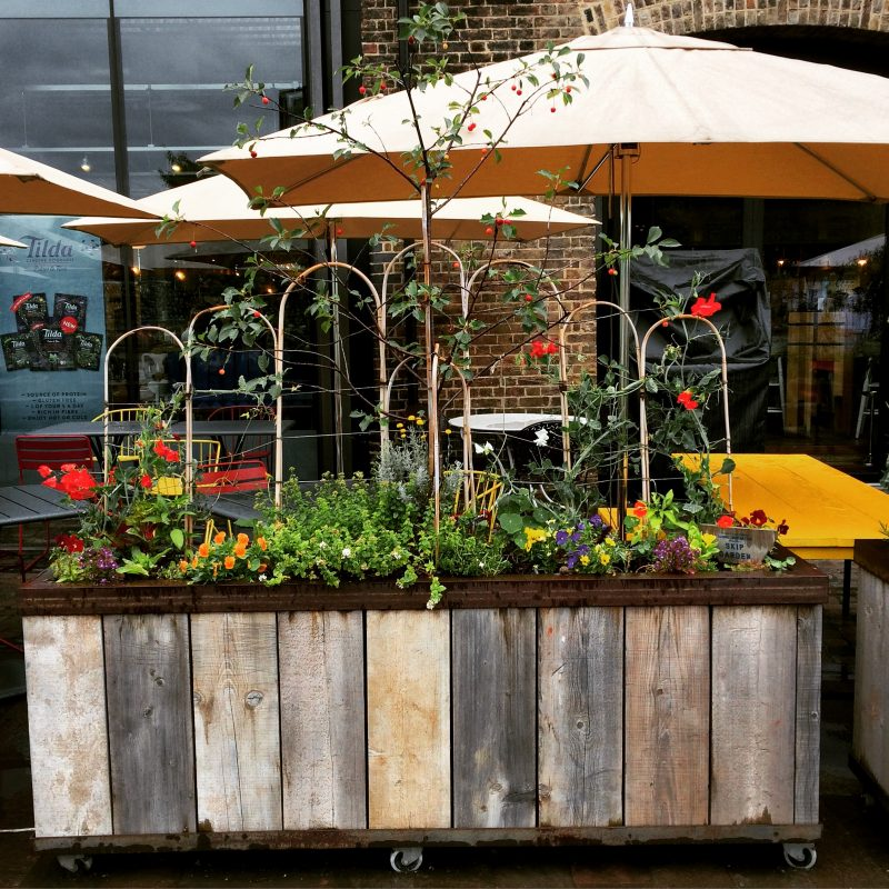 Recycled containers for veggie gardens