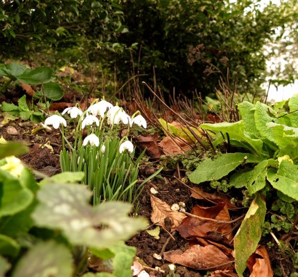 Go close and low when photographing snowdrops