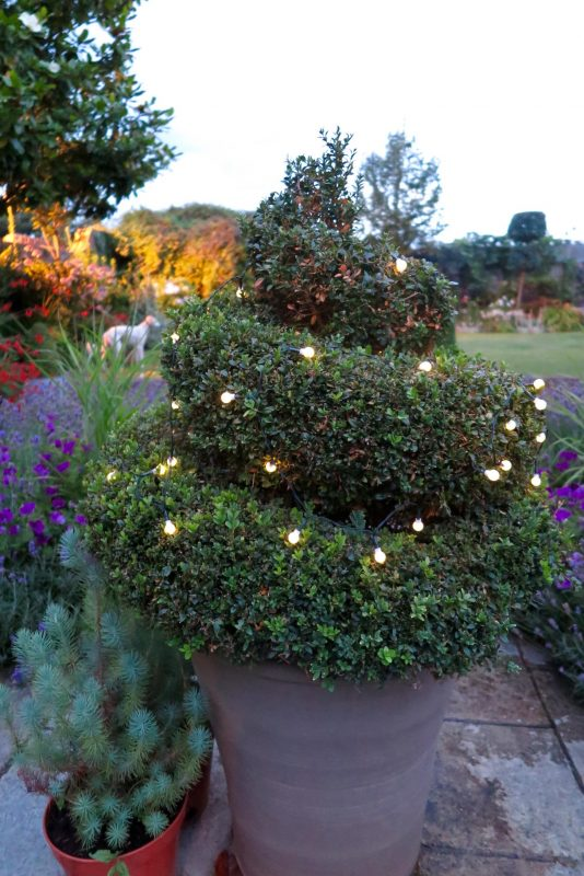 Solar Berry Lights from Festive Lights