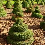 Spiral topiary growing in field