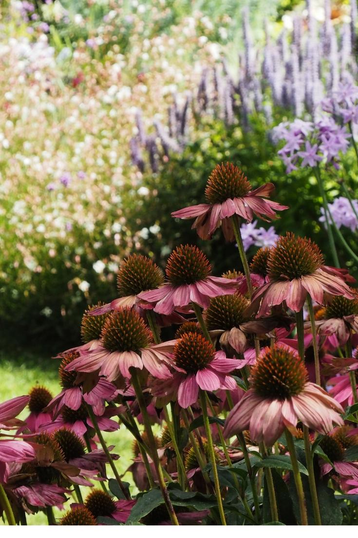 Simple garden ideas from St Erth Diggers Garden