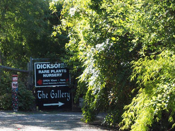 Dicksonia Rare Plants