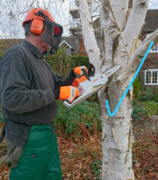 The correct position for sawing branches off a tree