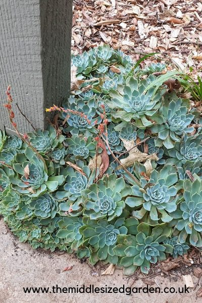 Succulents around the base of a post