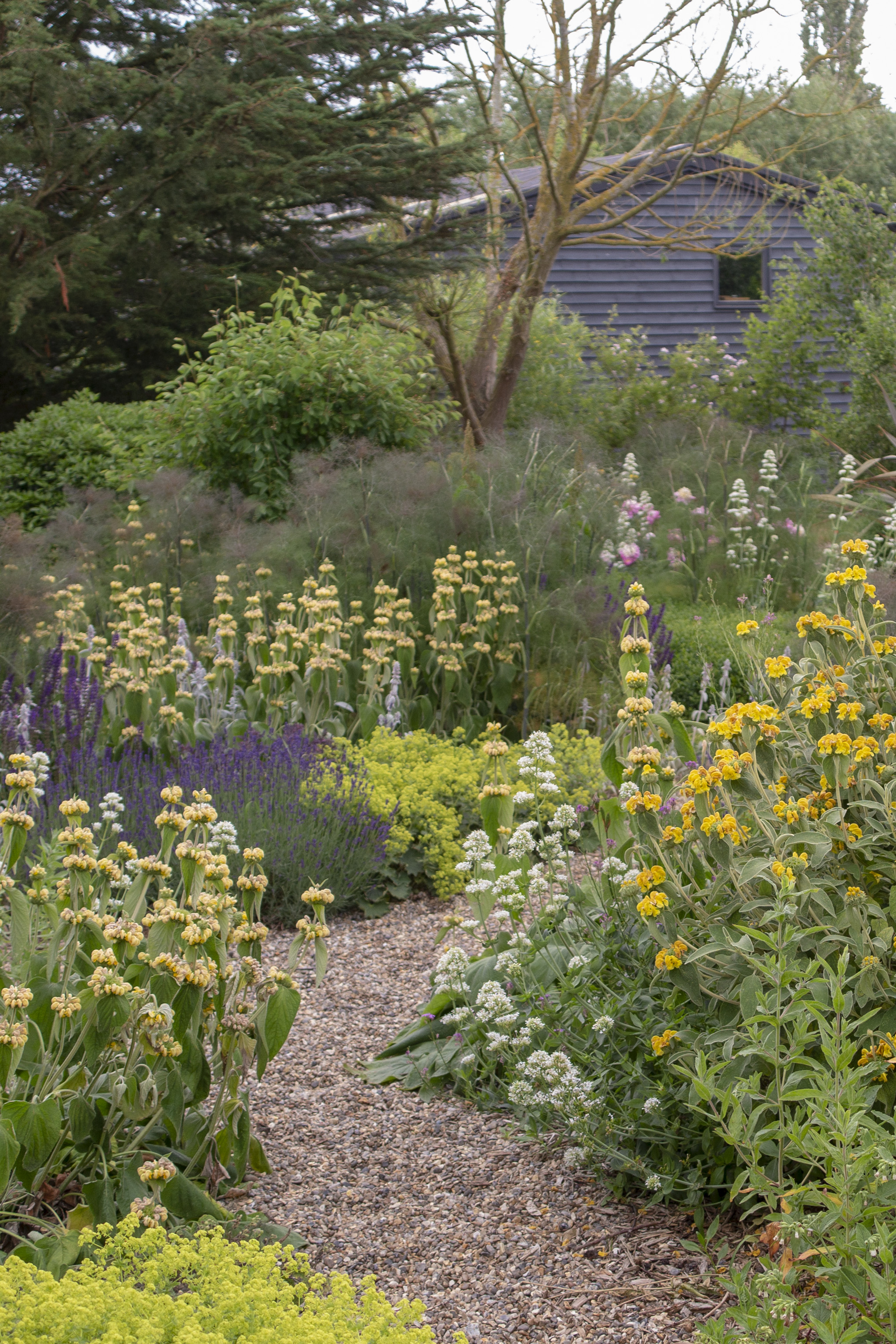 Plants which are fine in a windy garden will self-seed and spread
