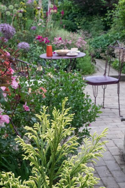 Planting ideas for small gardens