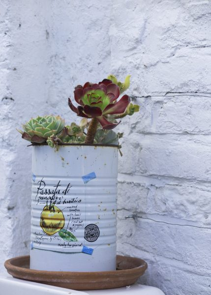 Use recycled tins for seaside pot planting