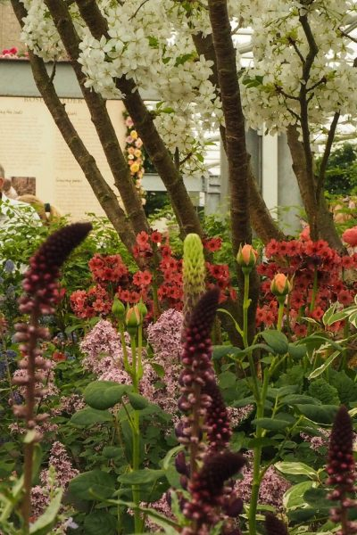 Trees and shrubs in flower borders