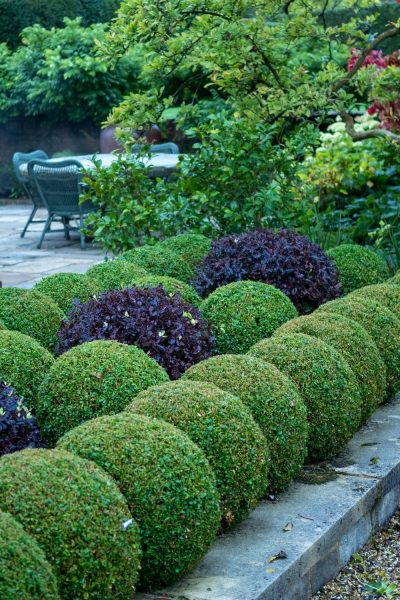 A formal use of box and pittosporum