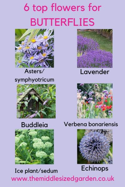 Top flowers for butterflies