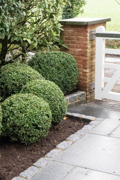 Plant topiary in pots or the ground