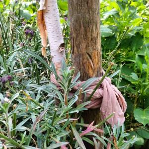 old stocking tree tie