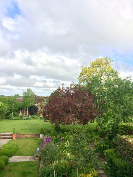 My favourite garden trees