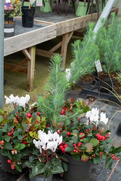 Try out plants in the garden centre before buying