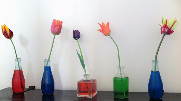Recycle bottles as vases