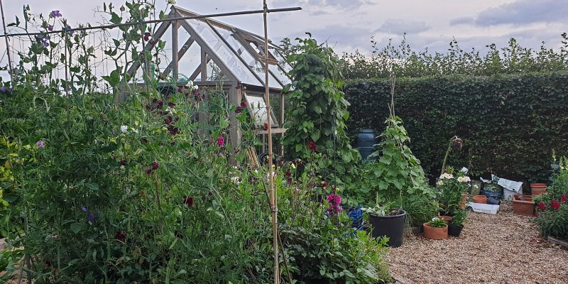 How to make money from your garden – growing cut flowers