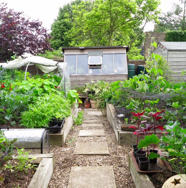 Vegetables in an L-shaped garden.