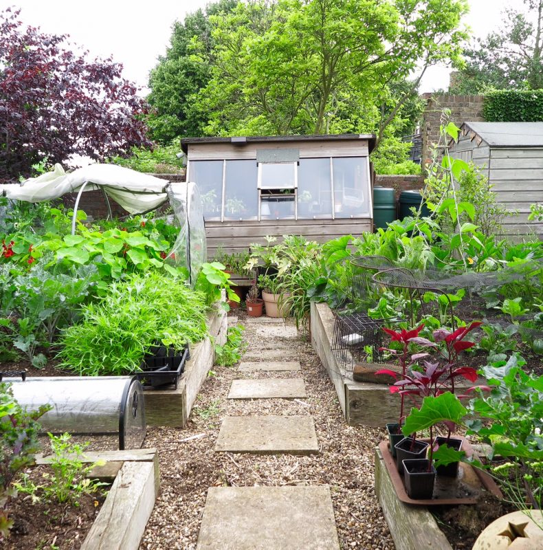 grow-your-own veggies in raised beds