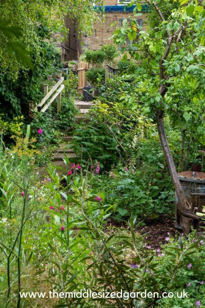 Trees for narrow shady gardens