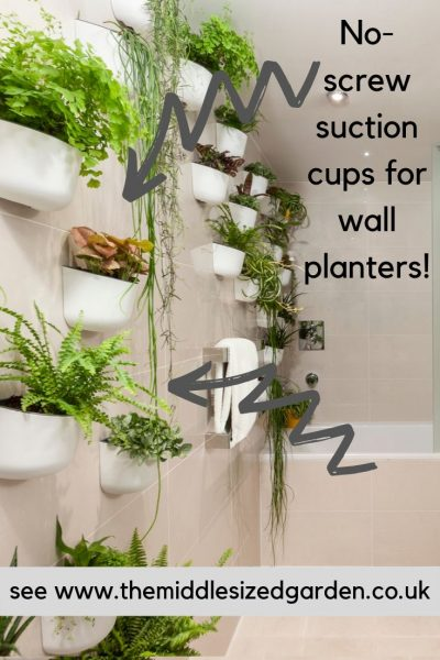 Decorate with plants with suction cups