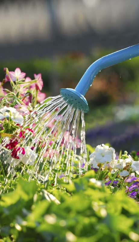 Fertilising your plants isn't difficult - it just means adding a liquid fertiliser such as Baby Bio Outdoor to your regular watering routine every 14 days. However, do be careful not to get water with fertiliser on leaves - make sure that you water the soil beneath the leaves instead.