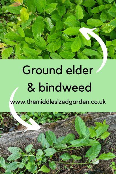 Perennial weeds