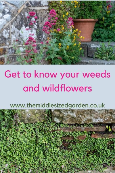 Find out more about weeds