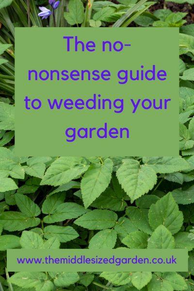 The no-nonsense guide to weeding your garden