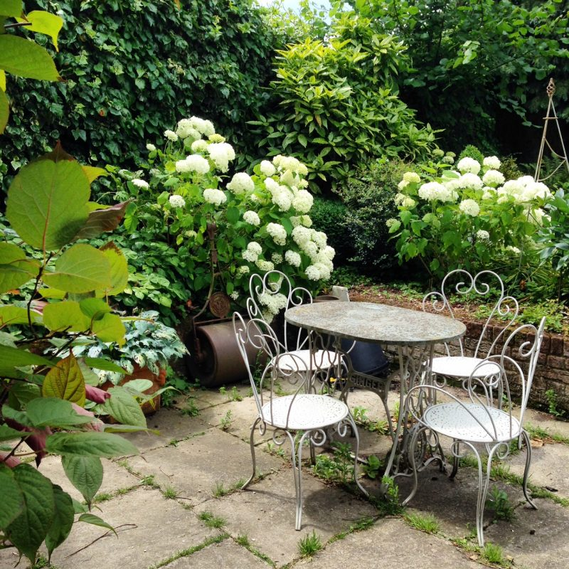 Holiday watering tips: hydrangeas may need watering while you're away