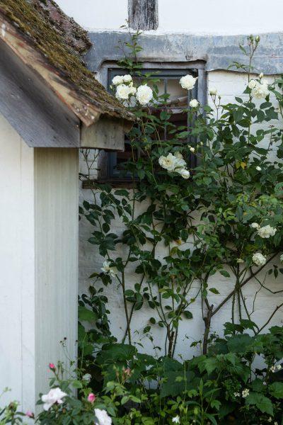 White on white summer garden colour