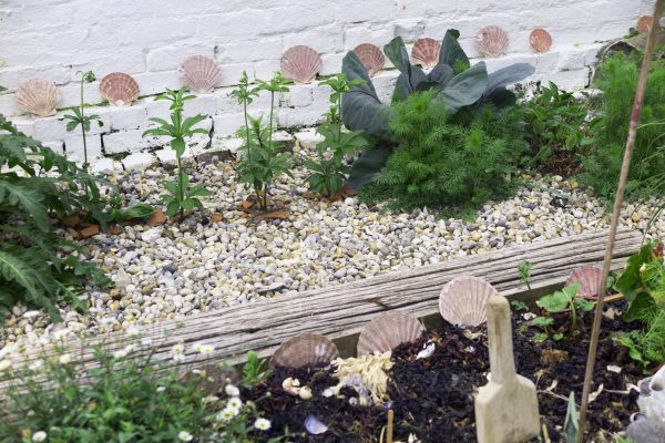 Seaside garden open for Whitstable Open Gardens