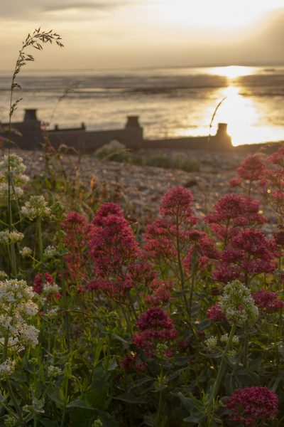 Beach garden ideas from the charming fishing village of Whitstable #beachgardens