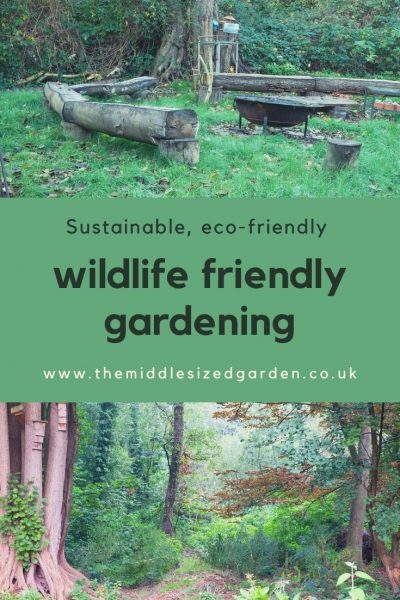 Wildlife friendly garden tips