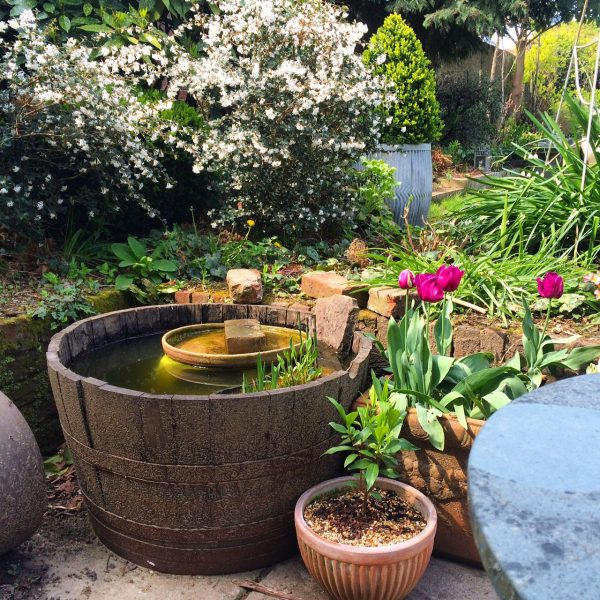 How to make a mini wildlife pond the middle sized garden for Plastic pond plants