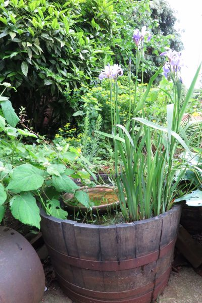 Make a mini pond from an oak barrel