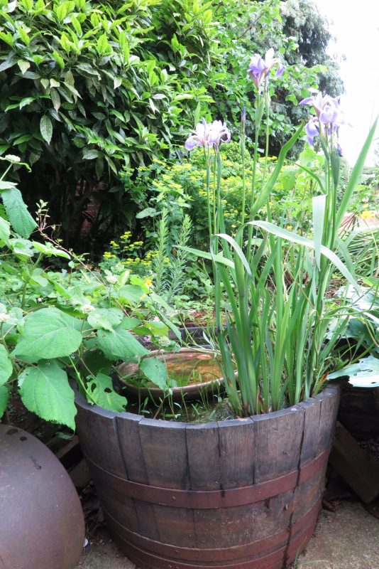 Make a mini wildlife pond from an oak barrel