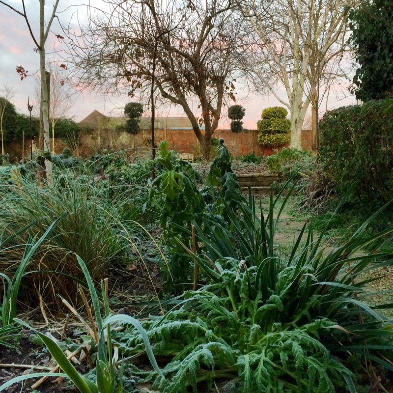 The Middlesized Garden in winter