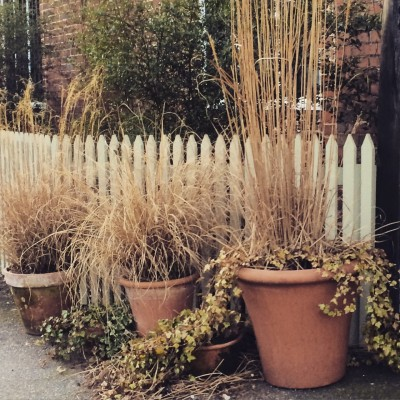 Move pots to where you can see them in winter