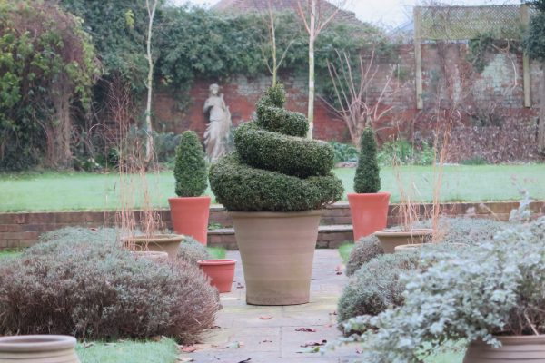 Evergreens in pots - winter