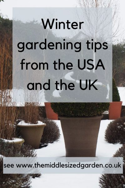 winter gardening advice