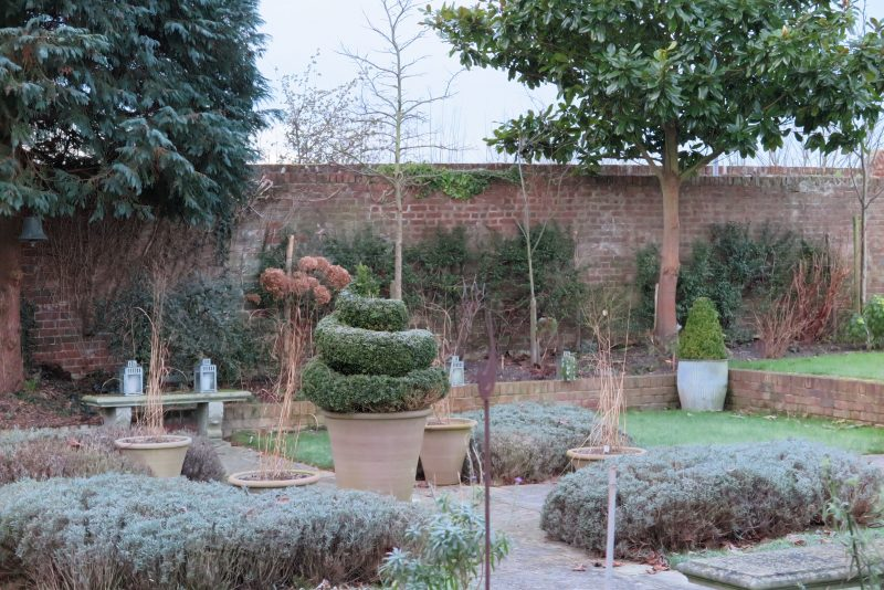 Prune lavender into a sculptural shape for winter