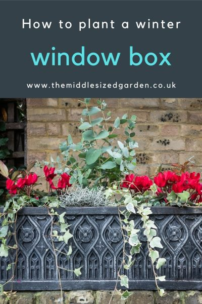 Winter box with cyclamen and grey foliage