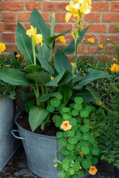 Seasonal garden planter displays